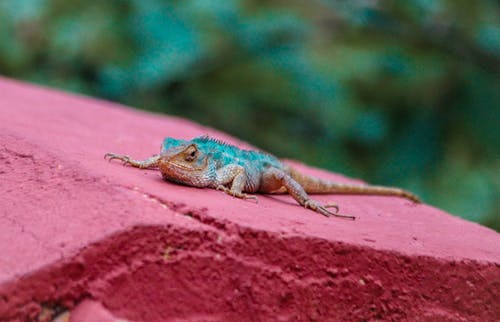 Free stock photo of animal photography, lizard, natue