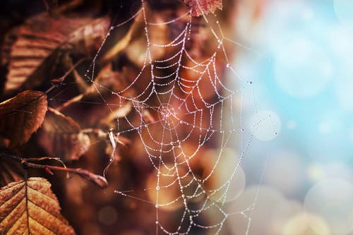 Shallow Focus Photo of White Spiderweb