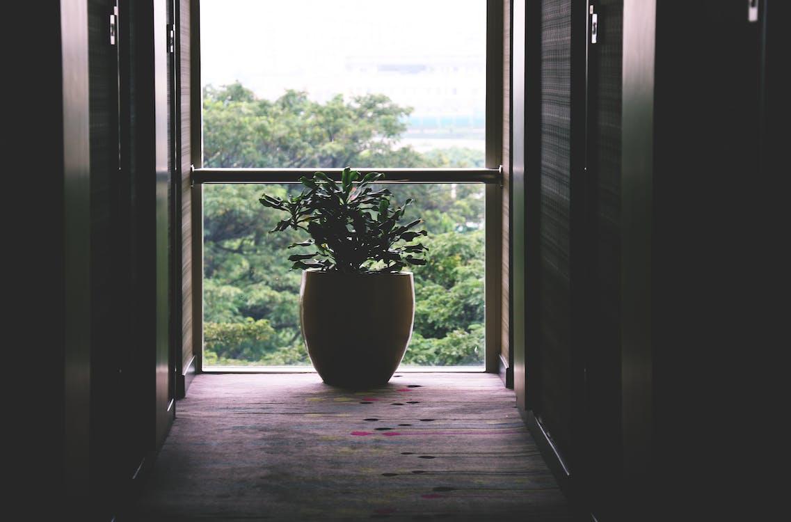 Black Vase on Floor Beside Window
