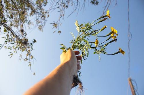 Kostenloses Stock Foto zu bäume, blauer himmel, blühende blumen, blumen