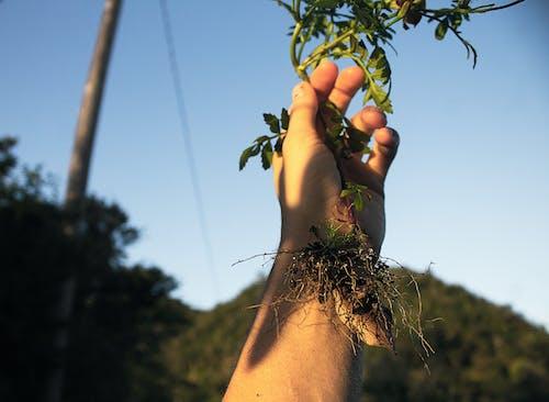 Kostenloses Stock Foto zu blumen, dunkelgrüne pflanzen, festhalten, glden stunde