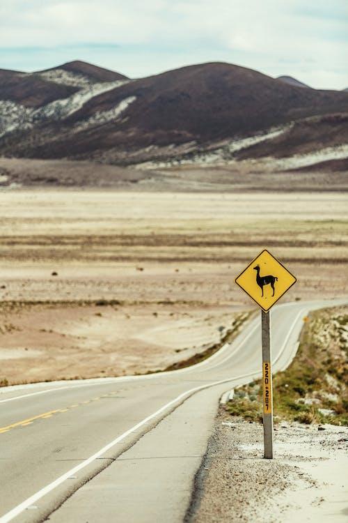 Gratis lagerfoto af advarsel, advarselsskilt, afstand, asfalt