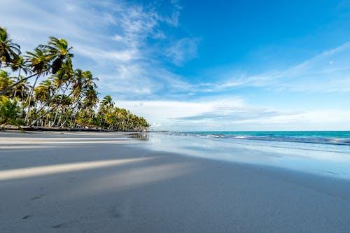 คลังภาพถ่ายฟรี ของ กลางวัน, คลื่น, ชายทะเล, ชายหาด
