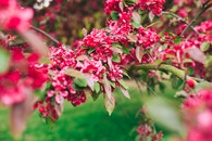 nature, flowers, plant