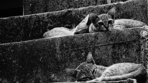 Free stock photo of b&w, cats, meoww