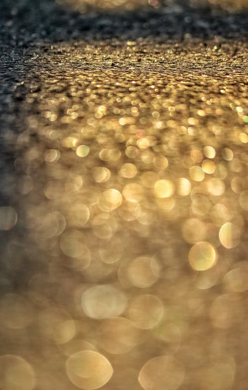 Free stock photo of blur, bokeh, focus, golden hour