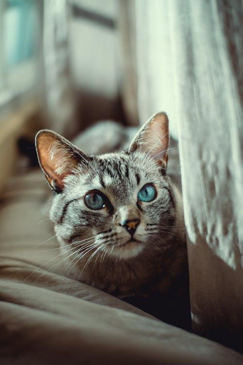 가정의, 고양이, 고양이 얼굴, 고양잇과 동물의 무료 스톡 사진