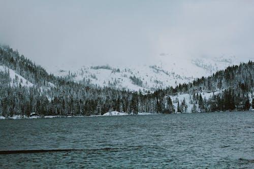 Kostnadsfri bild av natur, snö, yosemite