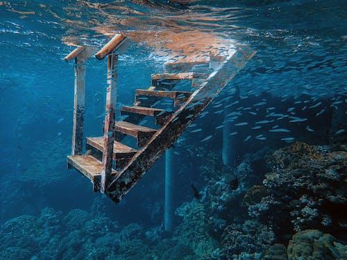 Foto d'estoc gratuïta de aigua, escala, escales, mar