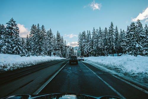 Free stock photo of car, nature, pine trees