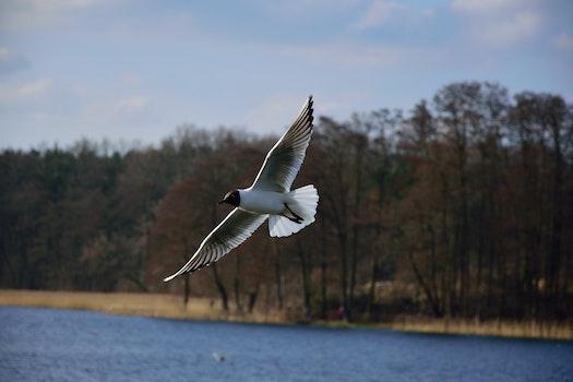 Desktop background of flight, nature, sky, bird