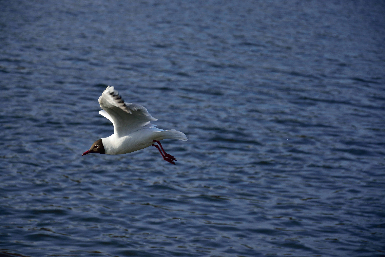Free stock photo of air, animal, background, bird
