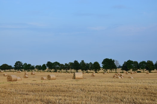 Free stock photo of landscape, field, village, summer