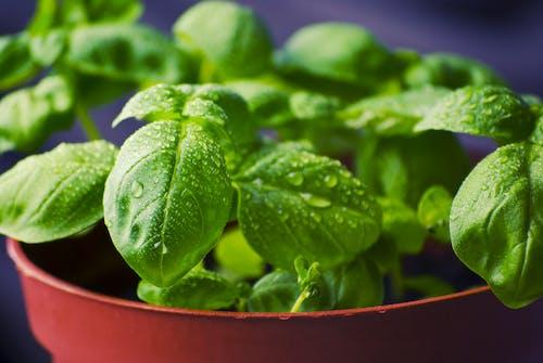 Gratis lagerfoto af grøn, nærbillede, natur, plante