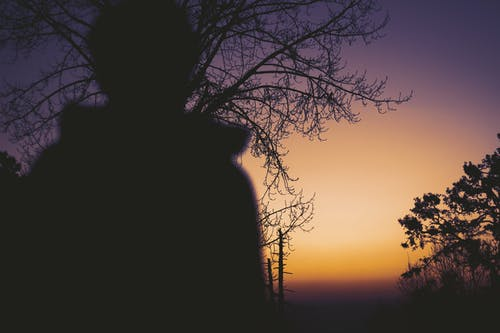 Silhouette of Person Standing Near Bare Tree during Sunset