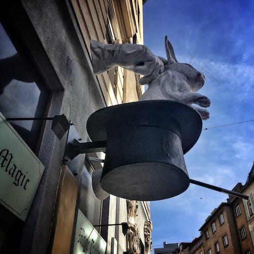 Kostnadsfri bild av hand, hatt, kanin, magi