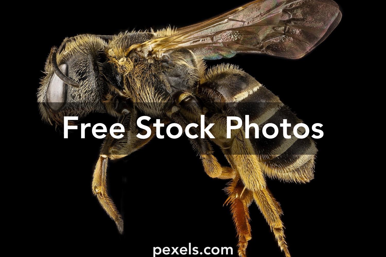 250 Beautiful Religious Photos Pexels Free Stock Photos: 250+ Beautiful Pollinator Photos Pexels · Free Stock Photos