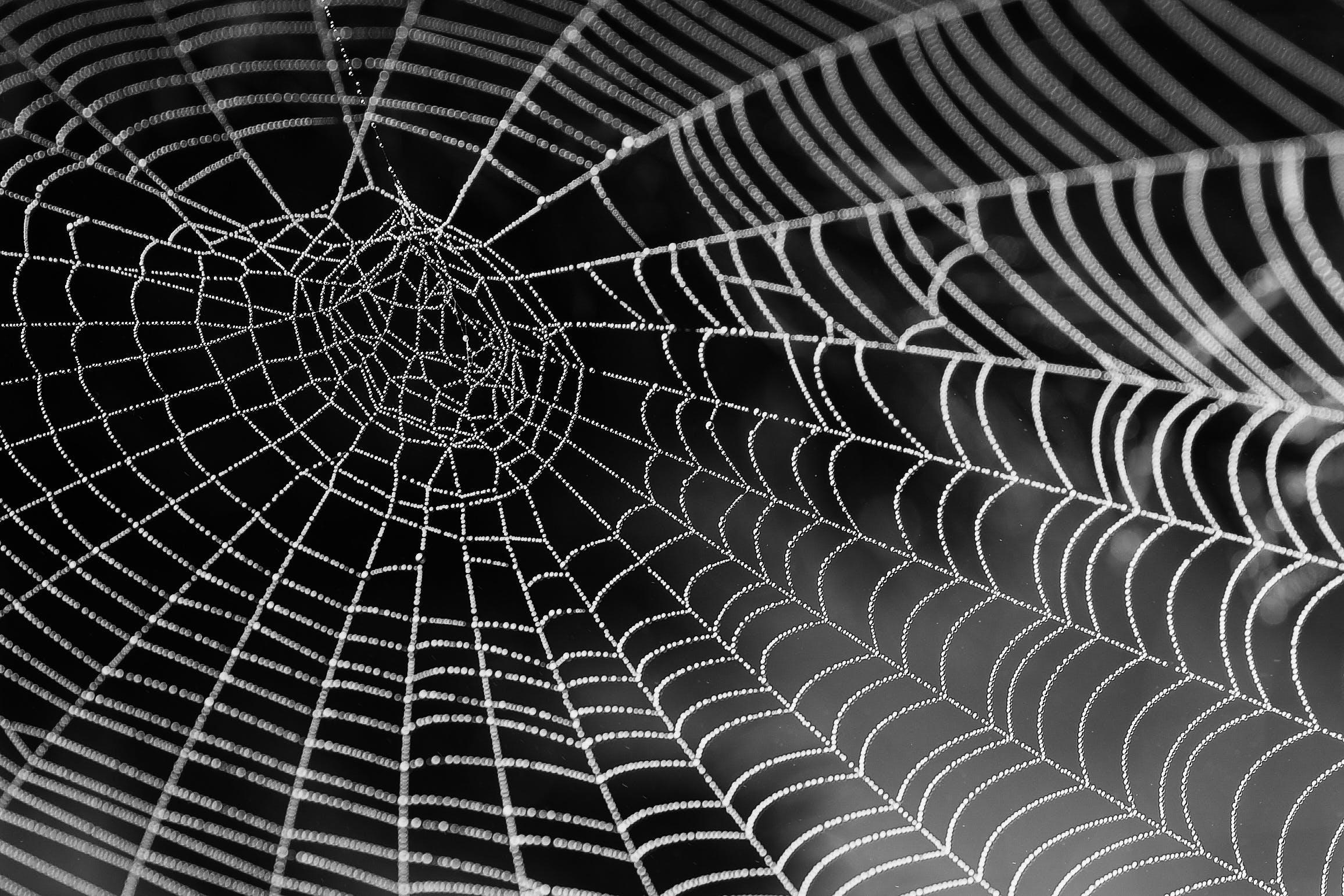 Kostenloses Stock Foto zu netz, schwarz und weiß, spinne, spinnennetz