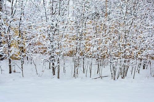 Gratis lagerfoto af baggrund, sne, snedækkede træer, sneklædt