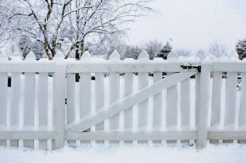 Gratis lagerfoto af barriere, fægte, forkølelse, frossen