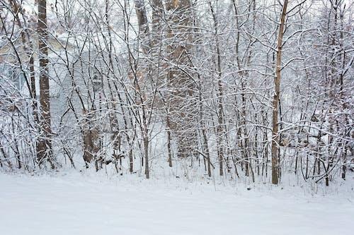 Gratis lagerfoto af baggrund, forkølelse, sne, snedækket skov