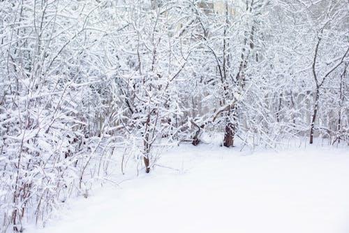 Gratis lagerfoto af baggrund, hvid, sne, sneklædt