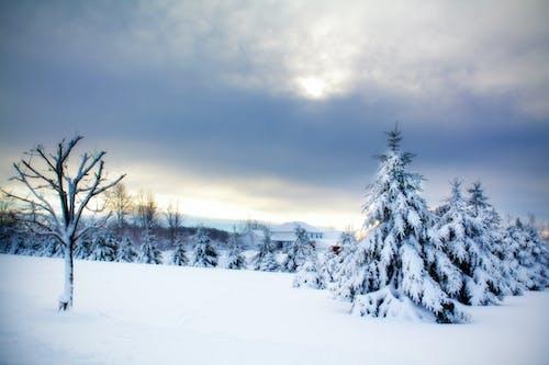 Gratis lagerfoto af aften, baggrund, landskab, sne