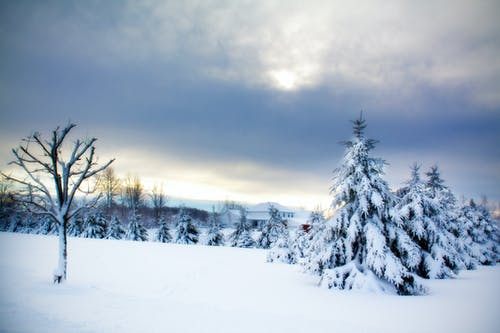 Fotobanka sbezplatnými fotkami na tému krajina, pozadie, sneh, stromy
