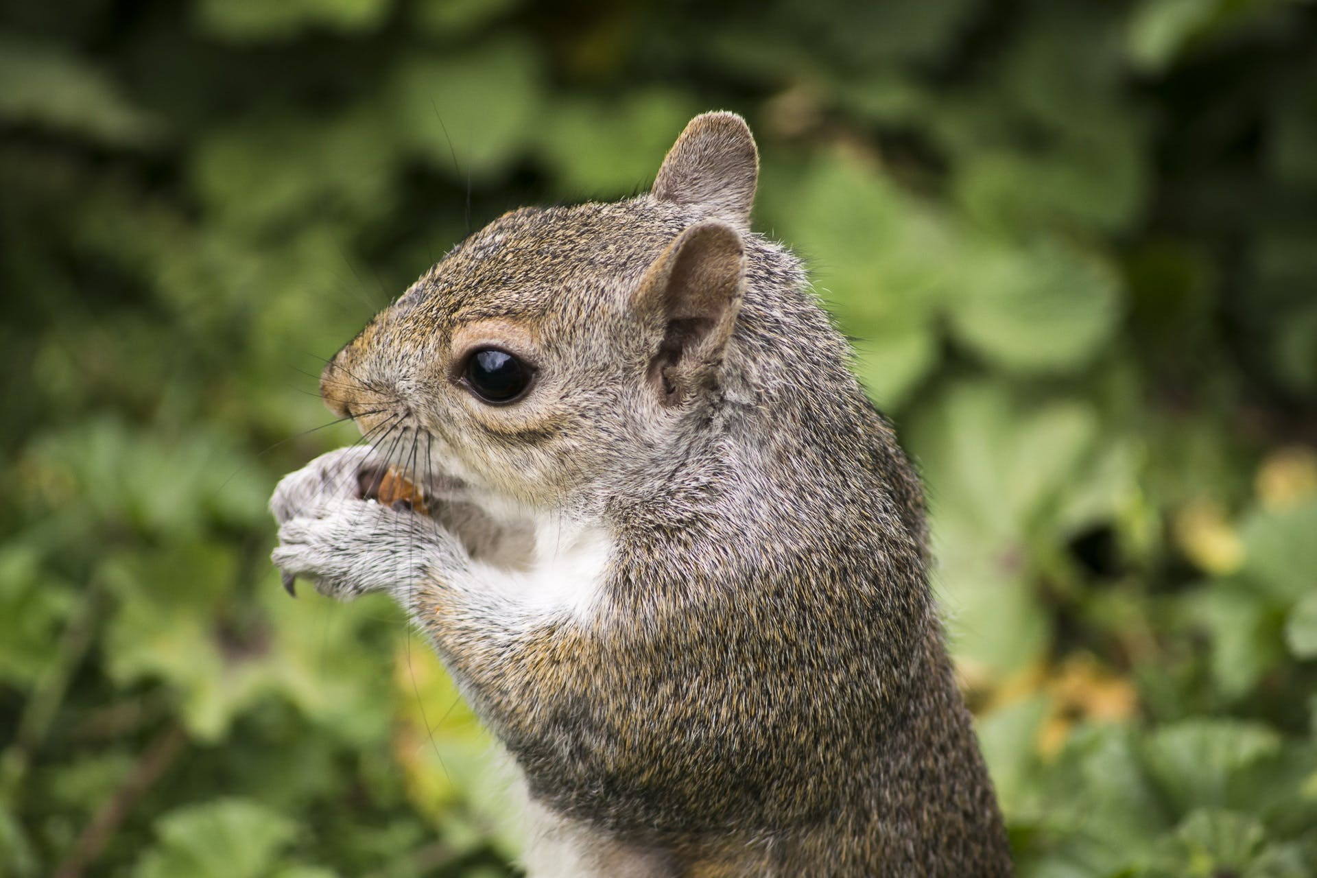 Grey and White Squirrel Surrounded by Green Plants