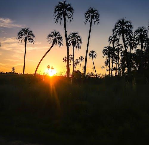 Darmowe zdjęcie z galerii z #sunset #landscape #palm #palmtree #sun #argentina