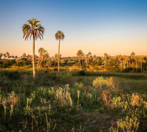 Darmowe zdjęcie z galerii z #sunset #palmtrees #landscapephotography #landscape #nationalpark #argentina
