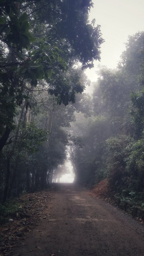 Free stock photo of cloud forest, country road, foggy morning