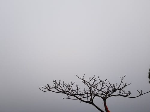 Free stock photo of dead tree, foggy morning