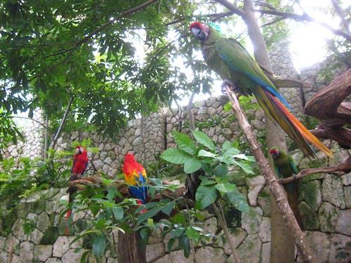 金剛鸚鵡, 鸚鵡 的 免费素材照片