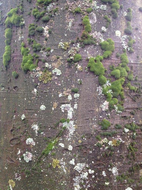 樹, 背景圖片, 苔蘚 的 免费素材照片