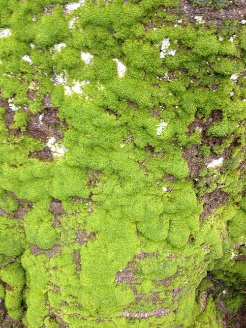 紋理, 綠色, 背景, 苔蘚 的 免费素材照片
