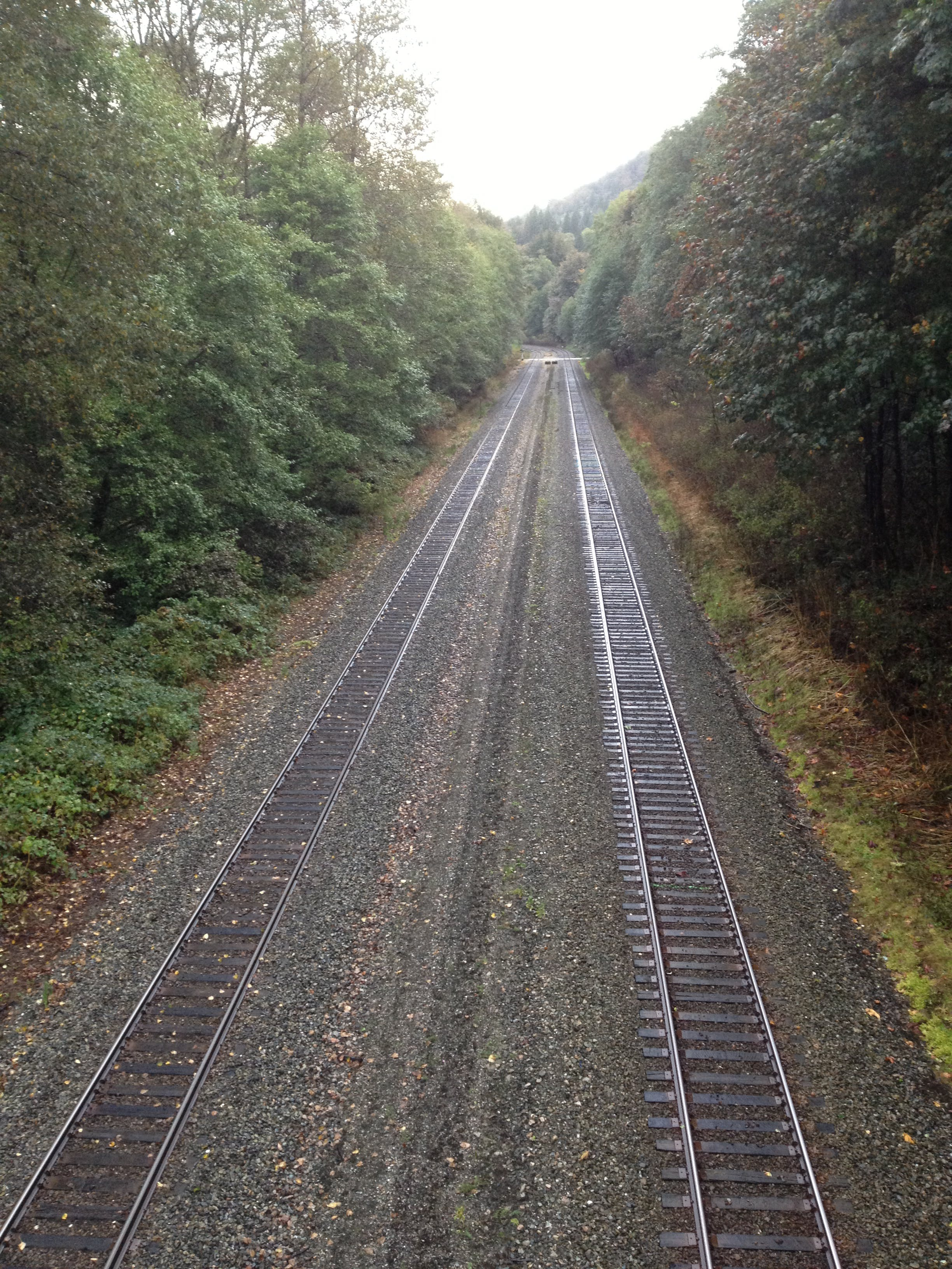 Free stock photo of perspective, summer, train tracks, trees