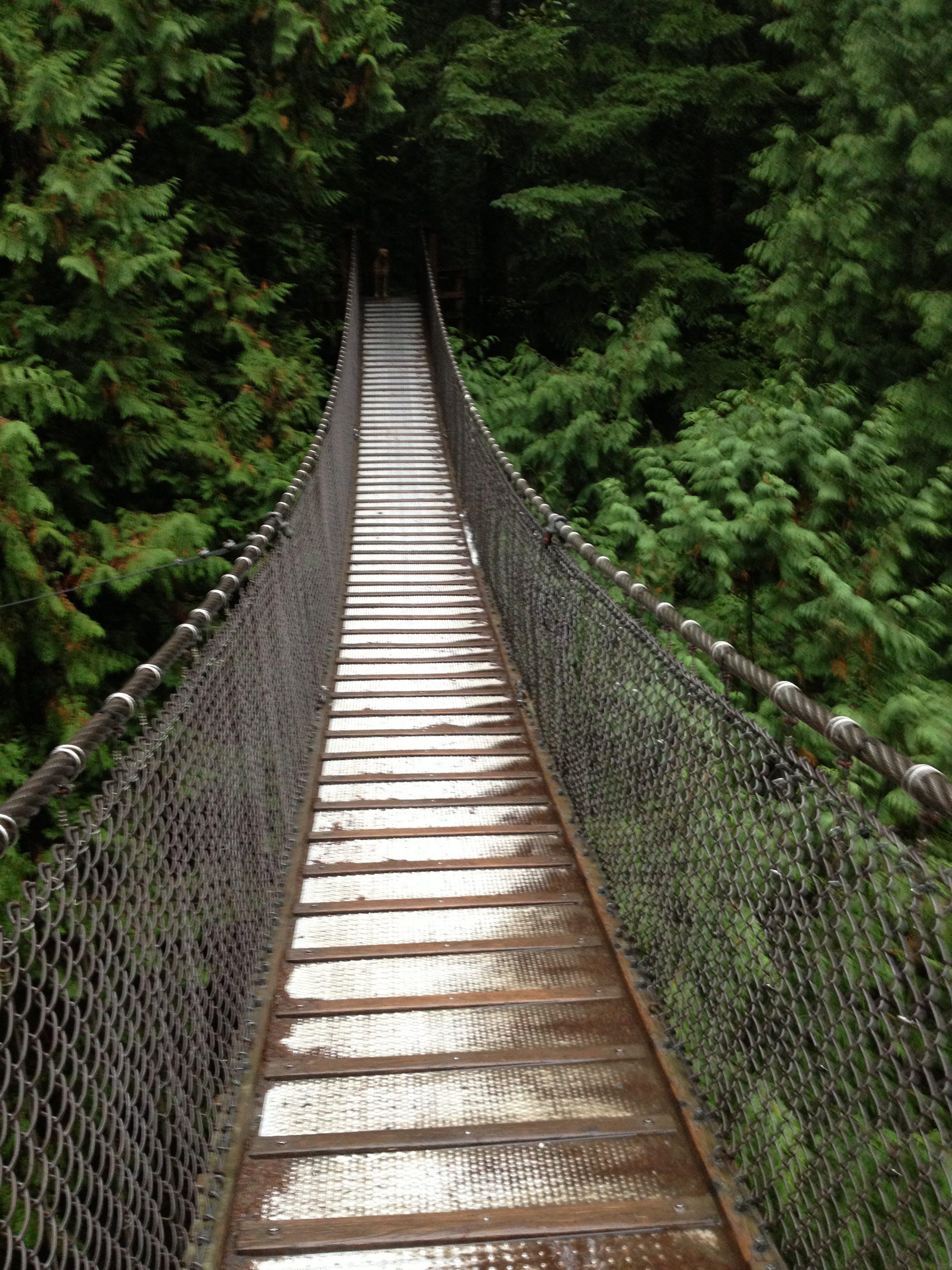 Free stock photo of pathway, shadow, suspension bridge, trees