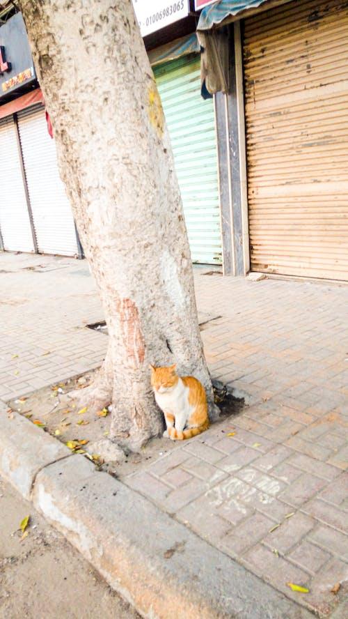 Základová fotografie zdarma na téma bicolor cat, kočka, strom, ulice