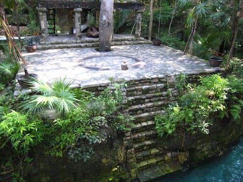 叢林, 摇滚, 樓梯 的 免费素材照片