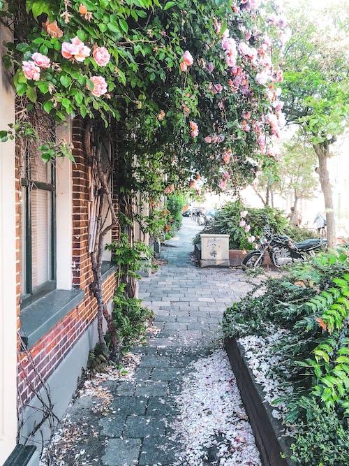 Darmowe zdjęcie z galerii z brukowana ulica, czas wiosny, czerwona cegła