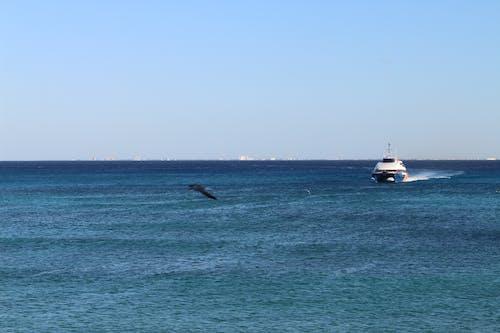 Photos gratuites de bateau, mer, océan
