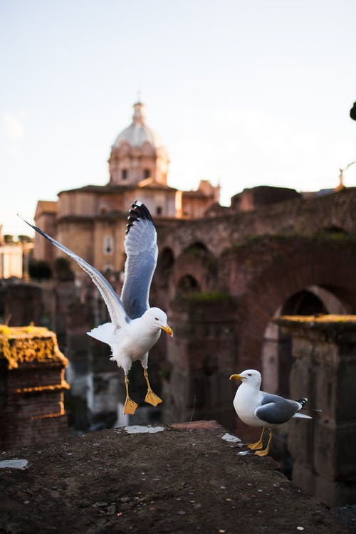 Photo of Two Seagulls