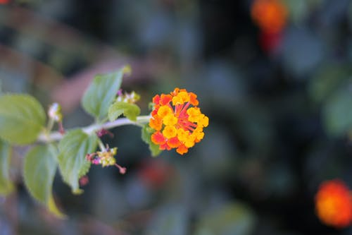 Selective Focus Photography of Orange-and-yellow Petaled Flowers