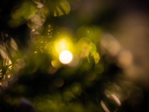 Бесплатное стоковое фото с боке, декорации, зеленый, легкий