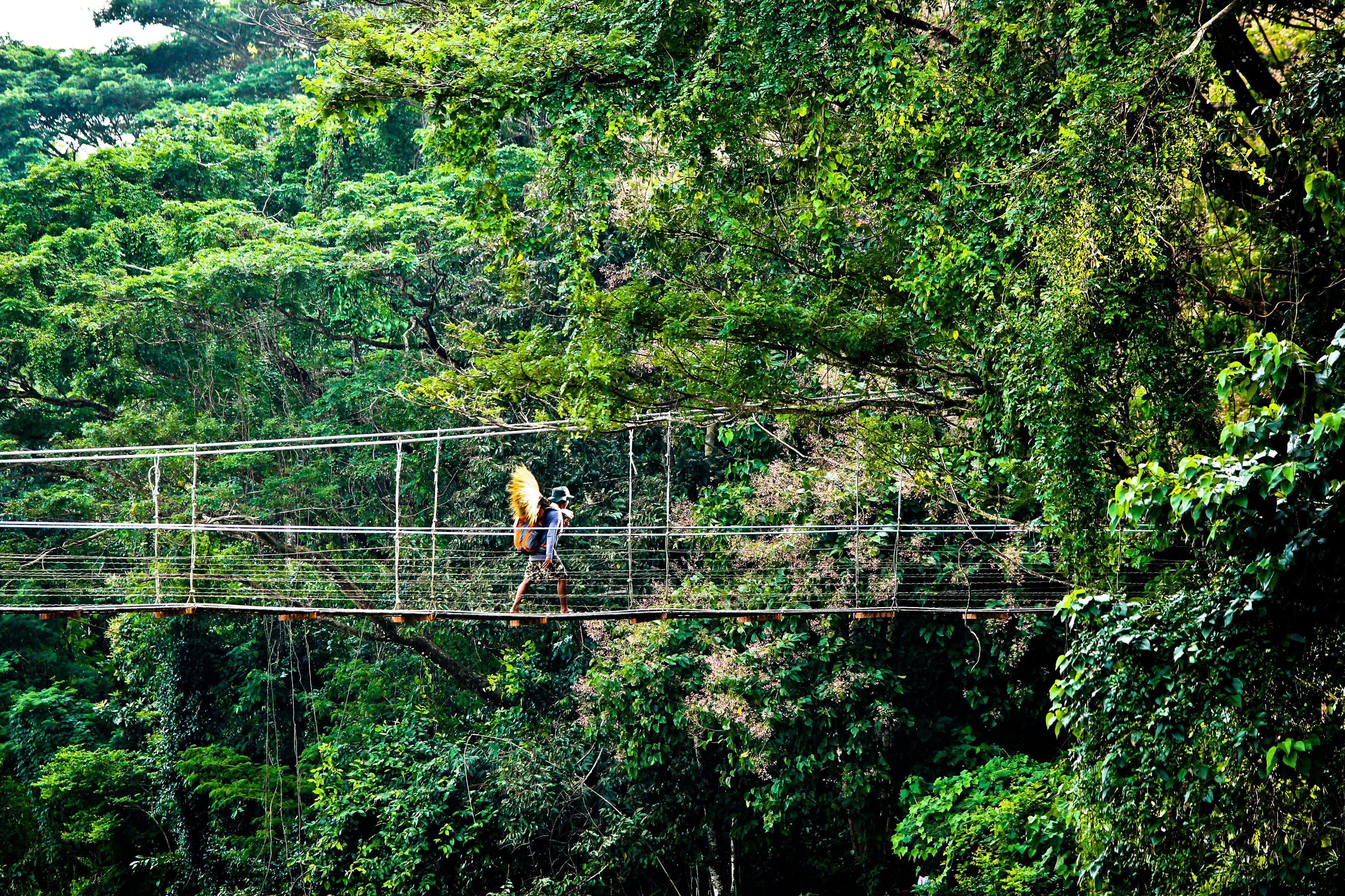 Person Walking on Hanging Bridges Near Trees