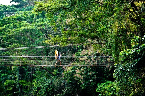Person Walking on Hanging Bridges Near Trees