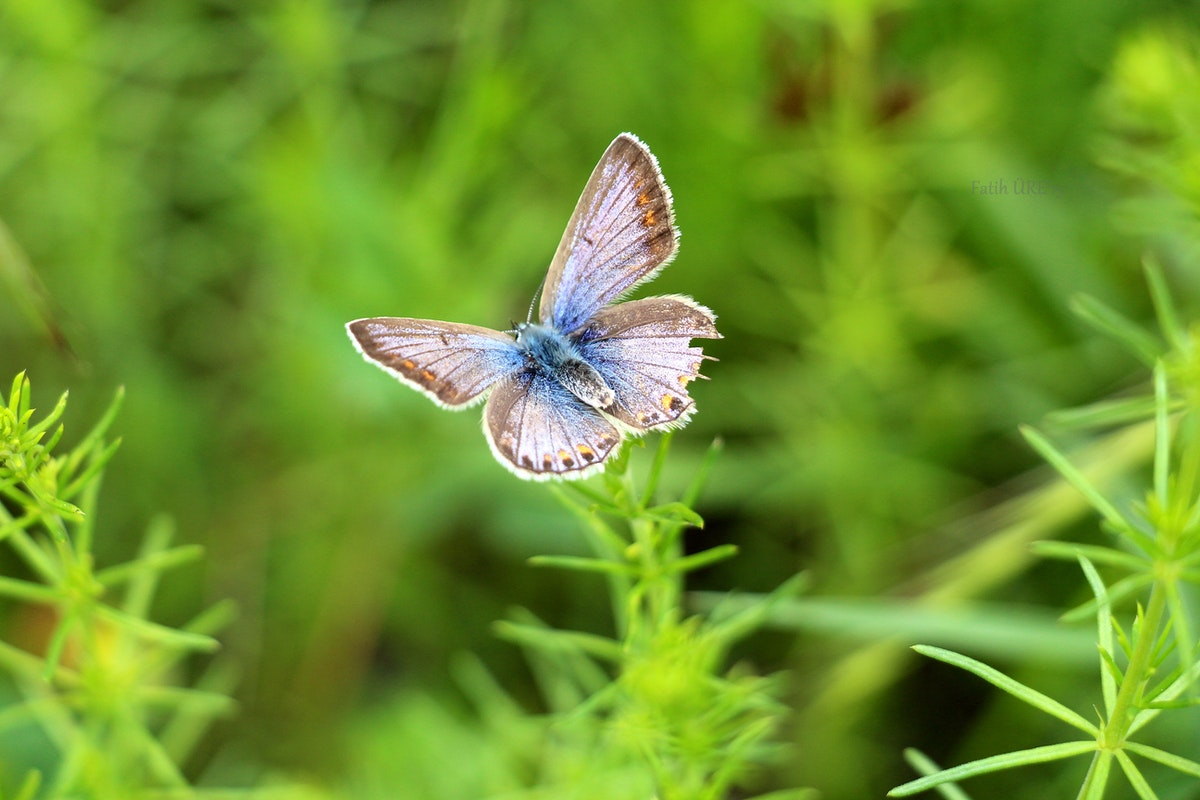 gray and blue butterfly free stock photo