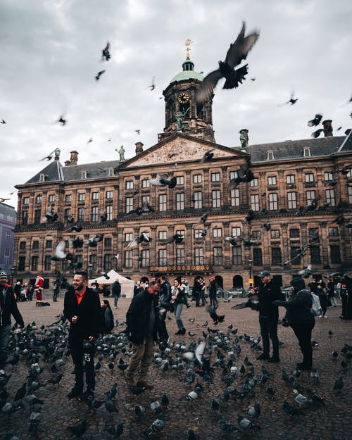 People Standing Near Flock of Birds
