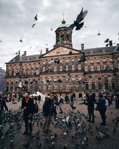 Foto profissional grátis de amontoado, ao ar livre, arquitetura, aviário